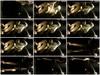 h966z5zgzlwy - v93 - 60 videos