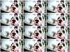qurehv1jw237 - v93 - 60 videos