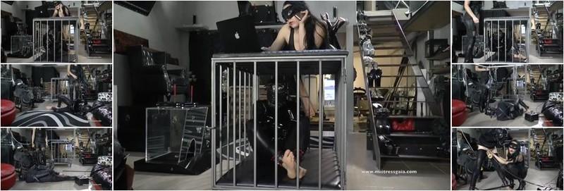 Mistress Gaia - MILKING CUM (HD)